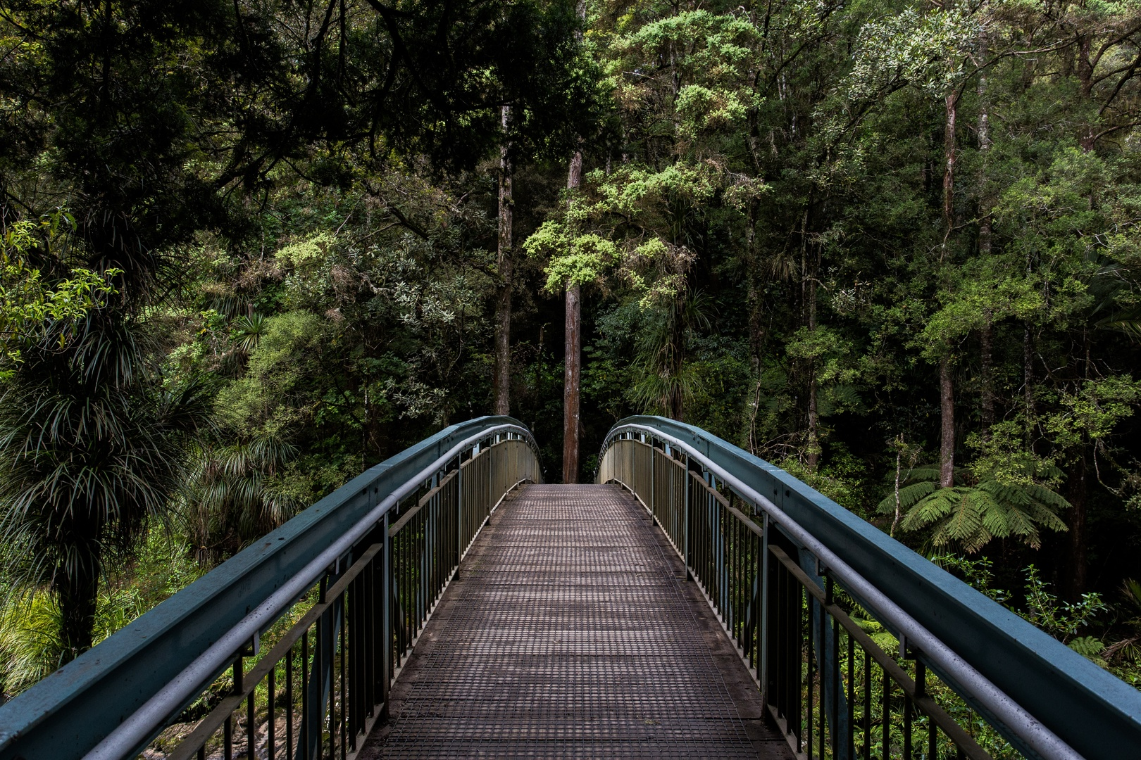 Bridge_ in_the_forest